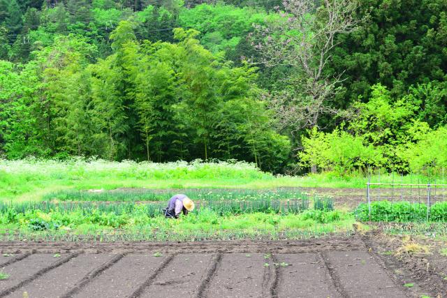 農地を宅地に転用する手続きについて