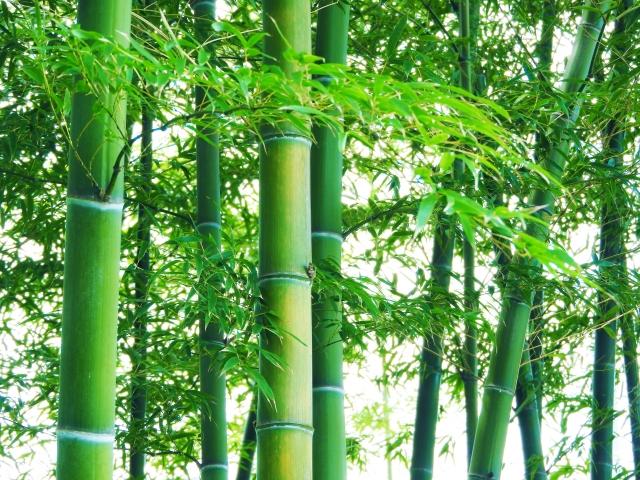 竹がバイオマス発電に不向きだとされている理由